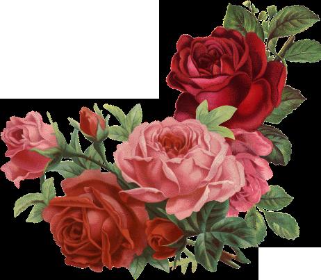 michal rózsák